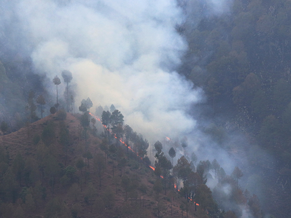 We told you forest fires are worsening climate change. Here's the nightmare in reverse.