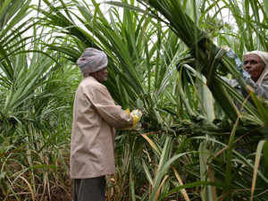 Cabinet approves Rs 8,000 cr package for sugar sector