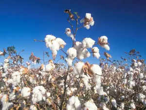 Cotton Output