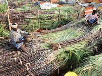 Sugarcane---Bccl