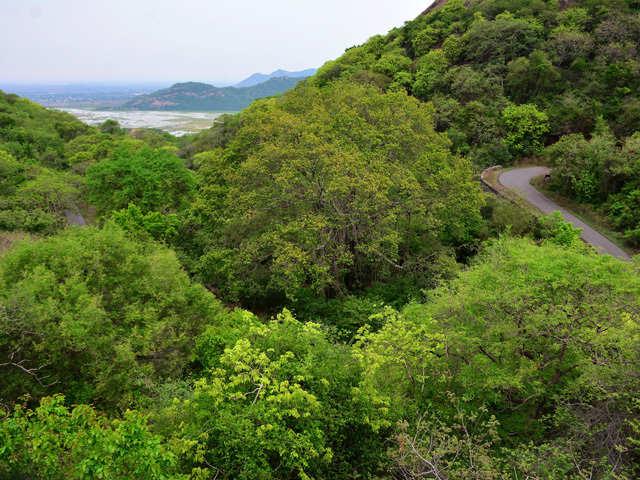 Monsoon getaway in Maharashtra: Head to Bhandardara, Amboli or Mahabaleshwar