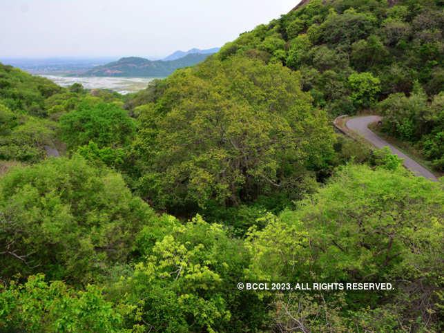 Kondapalli reserve forest_bccl