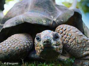 tortoise-edited