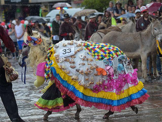 Image result for amasijos dunkey