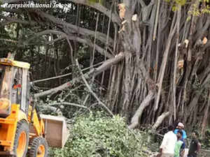 No tree felling for redevelopment project in south Delhi till Jul 19: NGT