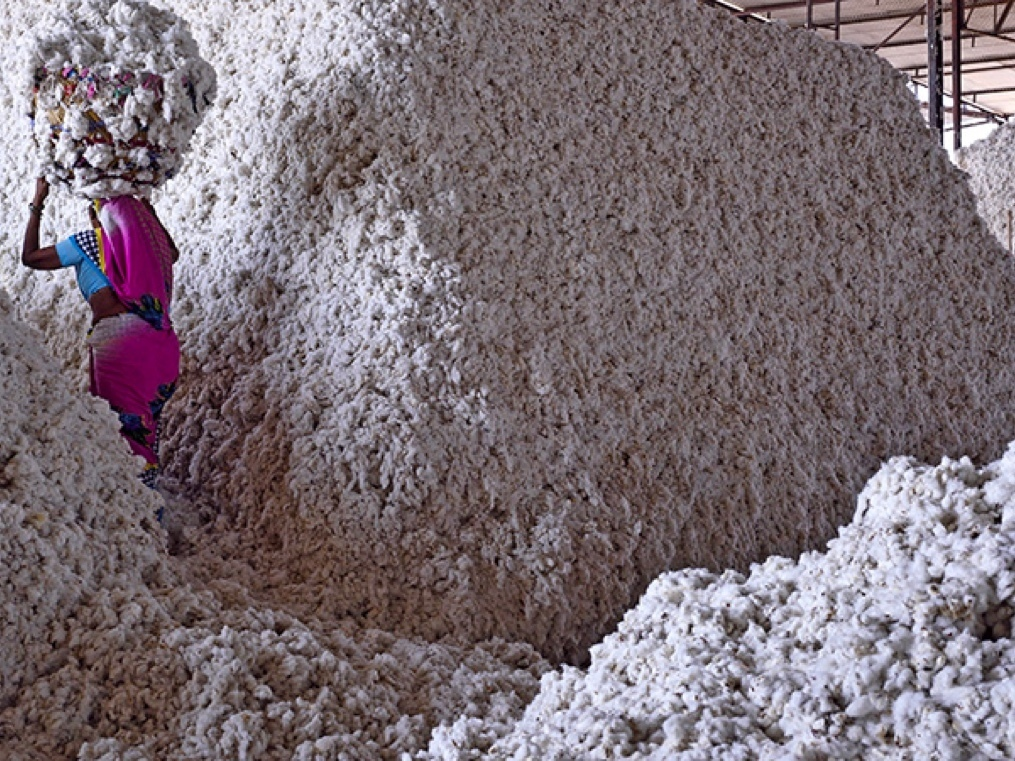 The Monsanto versus Nuziveedu battle will subvert the Indian IPR regime