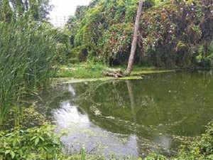 Pattandur-Agrahara-lake-bcc
