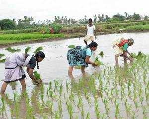 Zero-budget farming to help double farmer's income, says Rajiv Kumar