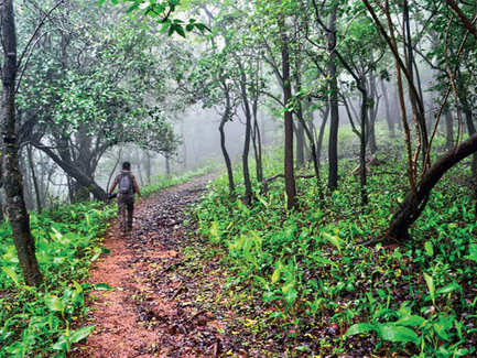 Go butterfly watching in Delhi or trekking in Mumbai: City trails that are perfect for a mid-week break