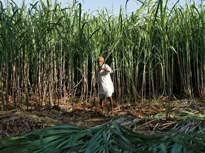 Government hikes sugarcane price by Rs 20/quintal to Rs 275