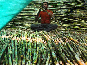 Modi cabinet approves sugarcane price hike by Rs 20/quintal to Rs 275