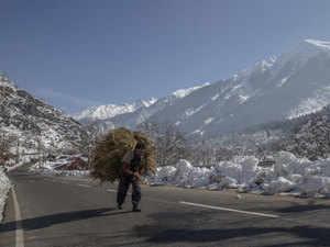 Kashmir-forest-AP