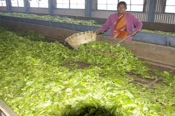 US' sanctions on Iran pinch tea traders in India