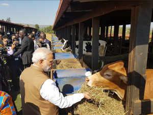 Modi-rawanda-cow-tw