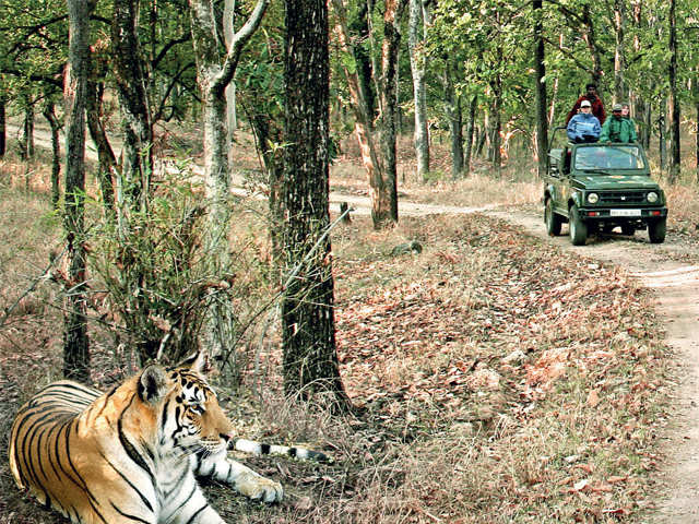 Tiger on the prowl: Visit Ranthambore, Sariska to spot the majestic wild cat