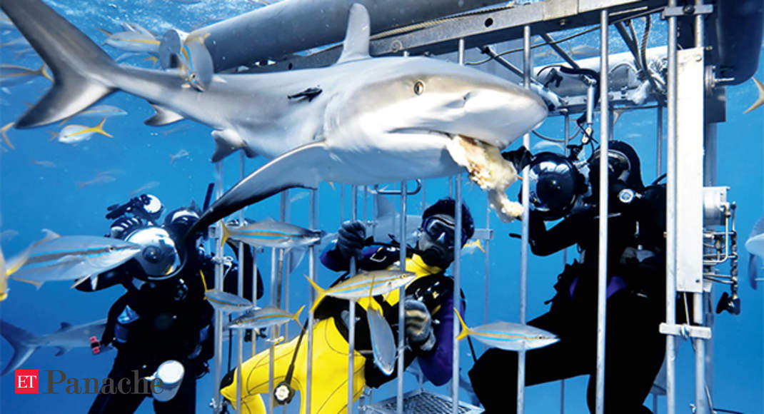 Marine Life Meet The Natives Of The Ocean Go Shark Cage Diving