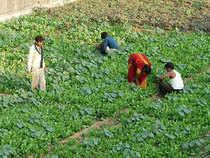 Farming-BCCL