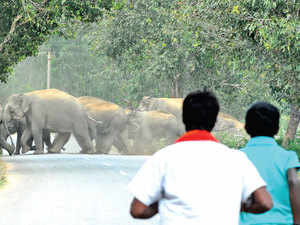 Bannerghatta National Park faces a direct threat from an exploding Bengaluru