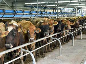 cow-agencies