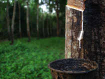 Rubber-tree---Thinkstock