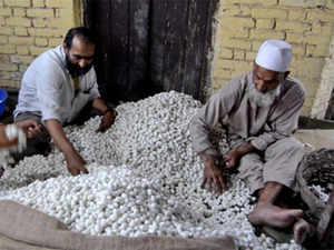 kashmir-farmer-bccl