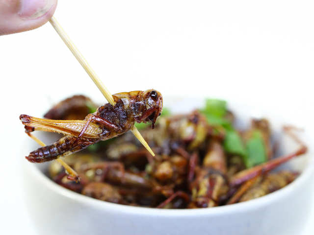 Keep your gut healthy: Eating crickets reduces inflammation