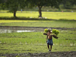 "Farmers have turned ""Lakhpatis"", but more than half still in debt: Nabard Survey"