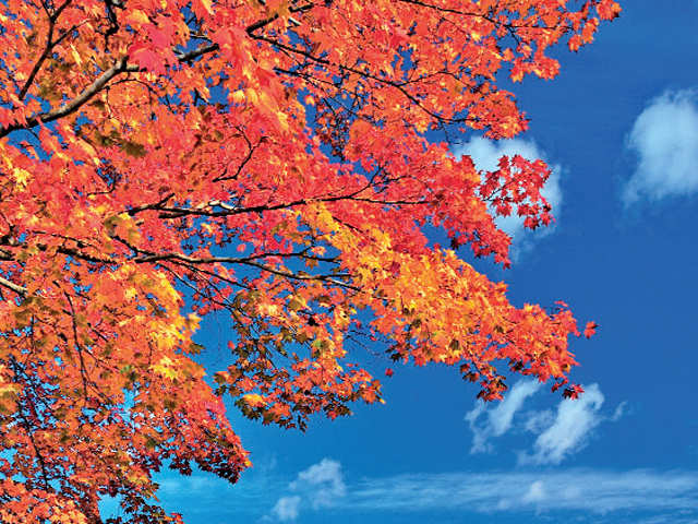From blue skies to warmer hues: Autumn is the best time to head to Japan
