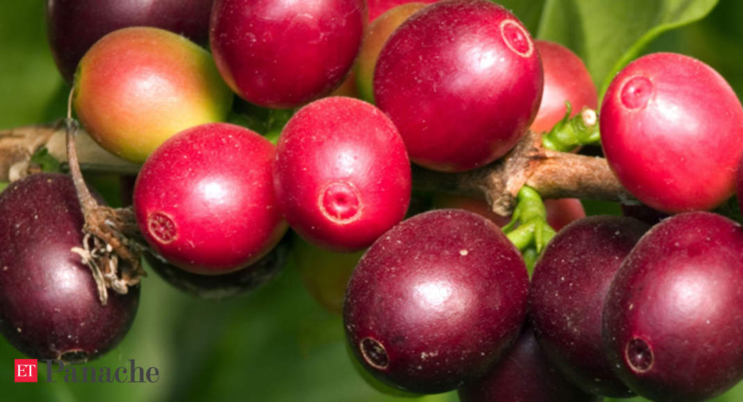 camu camu the amazonian fruit that fights obesity the economic times