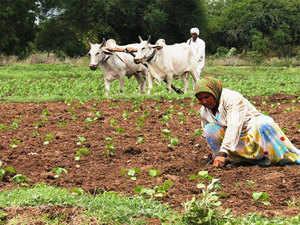Kharif crop planting increases as heavy rains raise reservoir levels