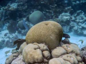 Coral Reef AFP