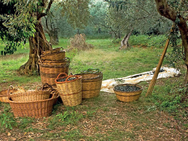 Under the Grecian sun: Go on an olive trail for a true taste of rural living