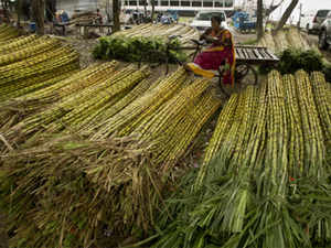 Sugarcane-AP