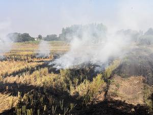 crop-burning-punjab-bccl