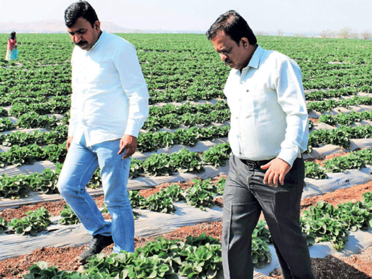 How farmer producer company model can transform Indian agriculture