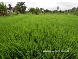 crop-BCCL