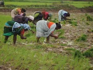 farmer-agencies