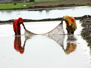 Women-farm-bccl