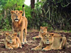 Lions.Bccl