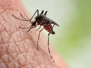zika-getty-images