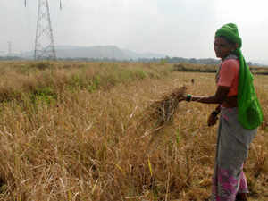 female-farmers-BCCL