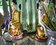 Buddhist temple now a nirvana for snakes