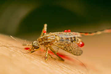 Zika virus in India: Facts you need to know