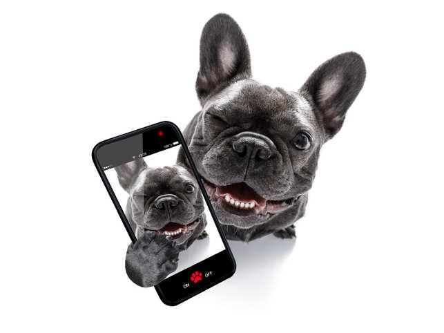 DogSmartphones