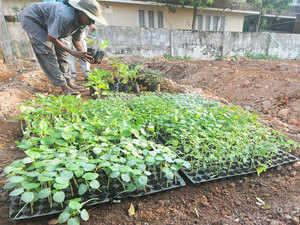 Organic-Farm-bccl