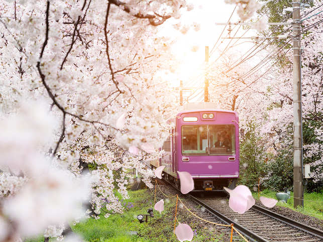 travel-japan-cherry-blossom-sakura-GettyImages-817124068