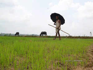 dbt route likely for agriculture power subsidy farmers to pay by