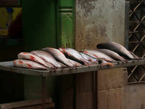 fish--getty