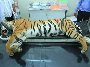 15606224069 The Maharashtra minister said orders to capture the tigress were given when  she killed five people.