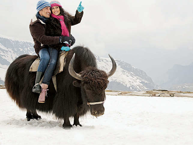YAK RIDE: In Manali, apart from trekking, you can also try a yak ride. View the snow-capped peaks and experience a game of Yak polo, too (©ImagesBazaar)